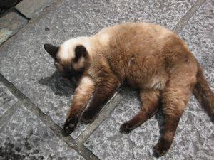天王寺の猫
