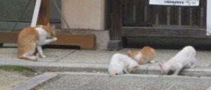 大江神社の猫