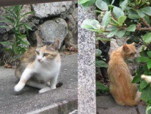 清水坂の猫