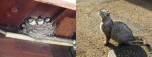 燕を見上げる猫
