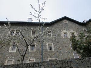 キプロスの桜