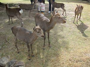 奈良公園の鹿奈良公園の鹿