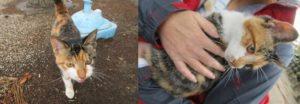 勝速日神社の猫