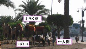 ラクダ、ロバ、人の比較図