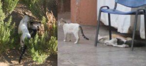 バヒア宮殿の猫