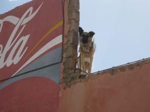 サービスエリアの犬