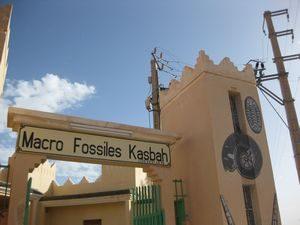 化石のお店