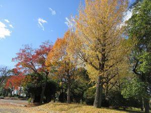 吹上公園の紅葉