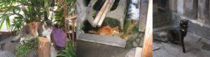 法善寺の猫