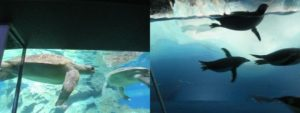 ウミガメとペンギン